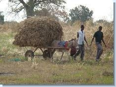 One Cart of Hay